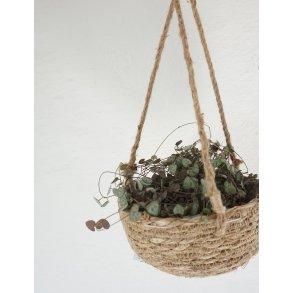 Skjulere & plantekurve